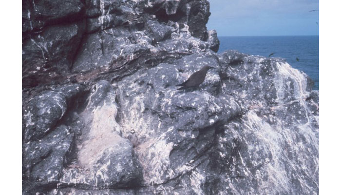 Guano deposits on Gardner Pinnacles, Laysan Island, Hawaii, 1969