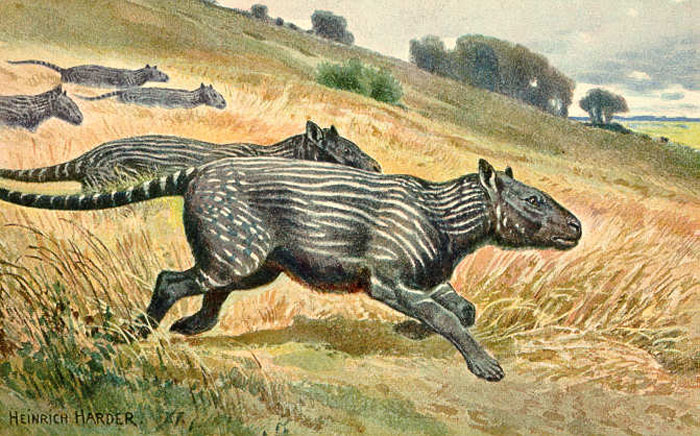 Phenacodus, a sheep-sized herbivore found in the Eocene era